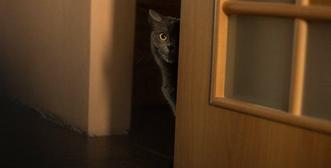猫が器用に『出来てしまう』こと4つ!油断をすると思わぬ事故も…