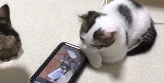 若かりし頃の自分の動画をみて動揺を隠しきれない猫ちゃん