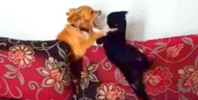 悲惨な生活でトラウマを抱えた猫…保護犬が救世主になる!