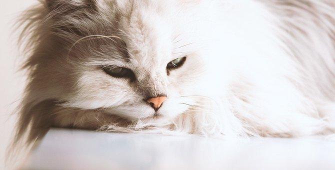ペルシャ猫がかかりやすい病気とその症状について