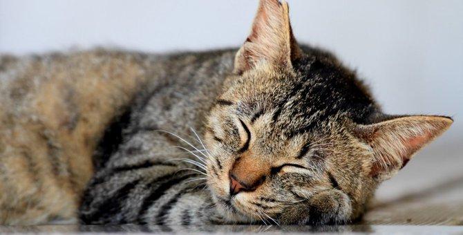 キジトラの白はどんな猫?毛色で違う性格や特徴