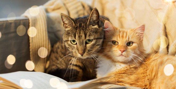 猫好きさんの心を鷲掴み♡猫にまつわる『世界の名言』4選