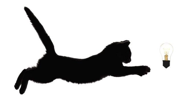 キャットウォールライトで可愛い猫がお出迎え!商品情報とおすすめポイント