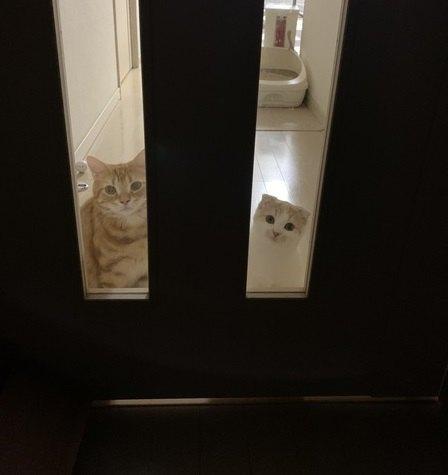 猫は足音を聞き分けてる?お出迎えの方法5つ