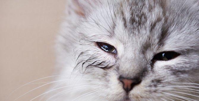 猫の結膜炎は目薬だけで完治する?点眼する期間や種類、さし方まで