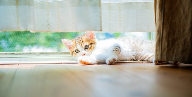 猫が『カーテンの裏』に隠れたがる5つのワケ