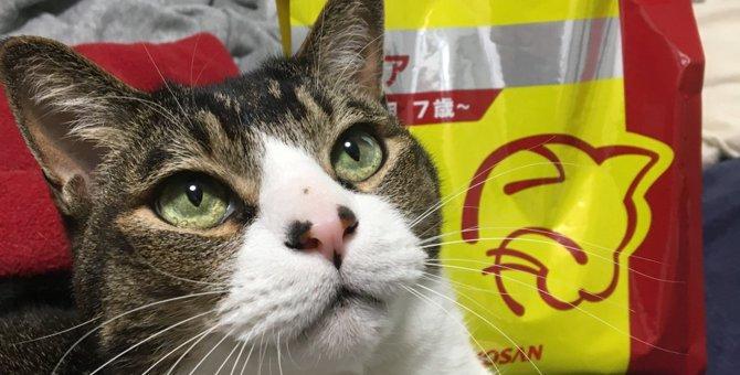 愛猫におすすめ!安心の『国産フード』ドクターズ