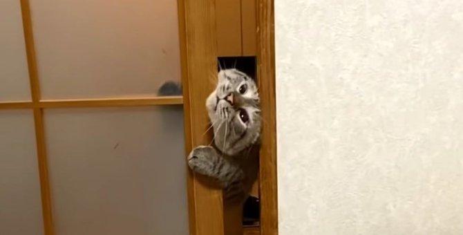 新入り子猫ちゃんに早く会いたくて仕方のない猫ちゃんの行動がかわいすぎ♡