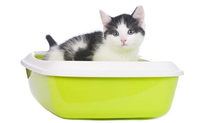 猫の便秘の症状5つ!解消させる方法やおすすめ商品