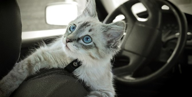 知っておくと便利!猫を乗り物に乗せる時のマナー