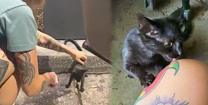 ドライブスルーで運命の出会い…可愛い子猫の「テイクアウト」にほっこり♡