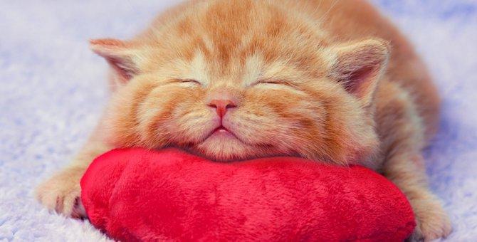 猫の寝相に隠された4つの気持ち