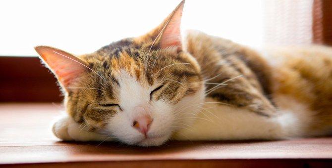 『寝起きの悪い猫』がみせる4つの行動と注意点