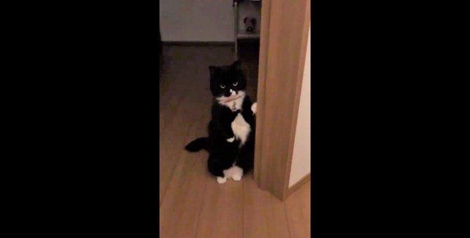 二足で佇む猫から重大発表がありそう…とツイッターの皆さんドキドキ