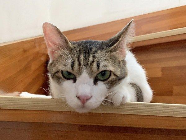 猫が苦手な音5つ