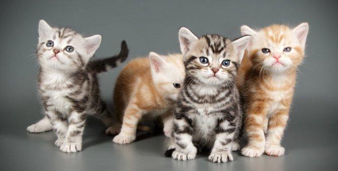 猫のショートヘア代表猫種4選
