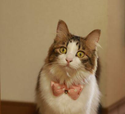 猫が緊張している時にかけてあげるといい言葉6つ