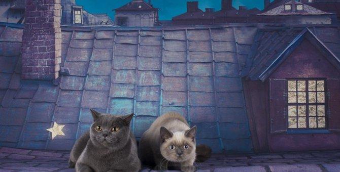 猫が夜中に鳴く理由とその対策法