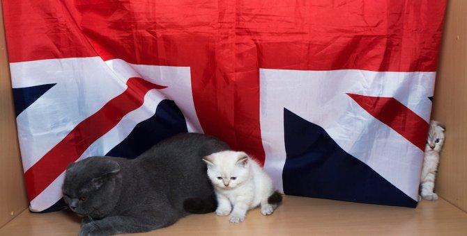 【世界にゃん事情】イギリス ロンドンで暮らす猫たち