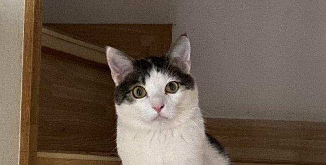 猫が『好きな声』5選!好感を持たれる声の特徴とは?