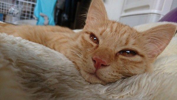 猫の『まばたき』に隠されたメッセージ4つ
