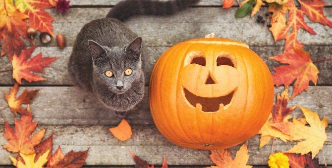 吉祥寺ねこ祭りに行こう!毎年10月に開催される猫だらけの祭典