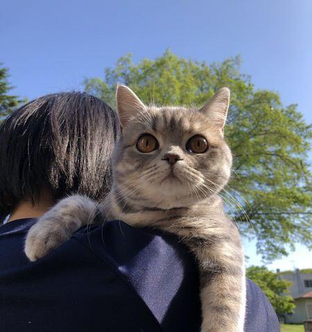 猫が楽しいとどんな仕草をする?9つの行動