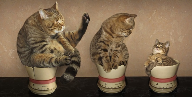 うちの子太りすぎ?猫もダイエットが必要!