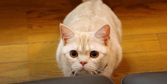 光を捕まえたい!猫ちゃんの壁ジャンプ♪