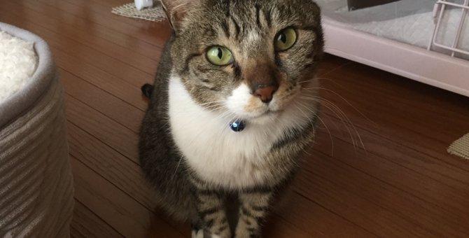 保健所に持ち込まれたシニア猫、感染症疑いで殺処分寸前にレスキュー!
