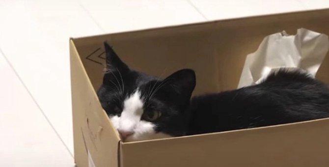 ダンボール箱にジャストフィットする猫ちゃん♡