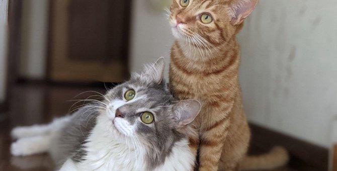 猫が真似しやすい飼い主の『癖&仕草』5選