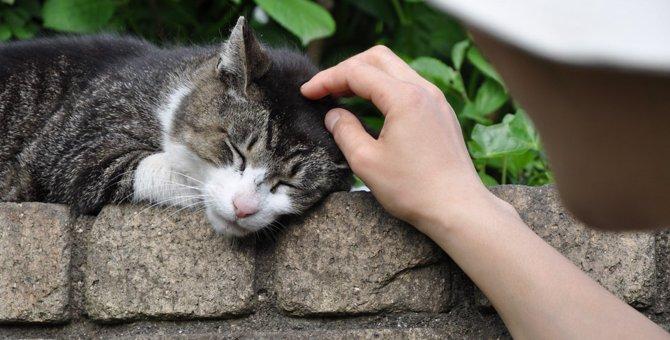野良猫の食べ物とは?いつも何を食べているの?