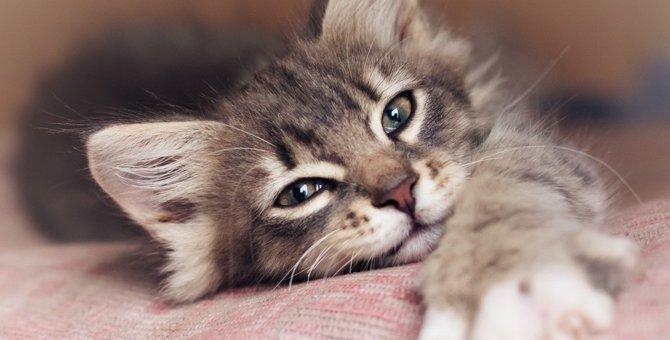 猫が『一緒に寝たくなる人』の共通点5つ