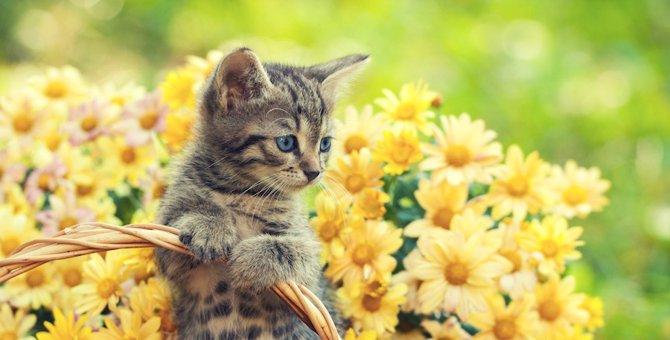 猫を飼ったら柔軟剤は避けるべき?注意したい香料の危険性について