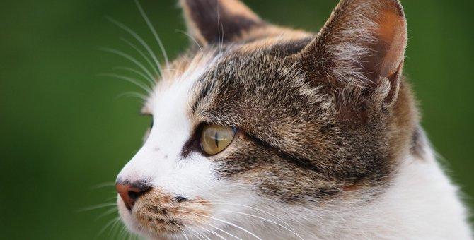 猫の瞳孔が細長いのはなぜ?『瞳』にまつわる豆知識5つ