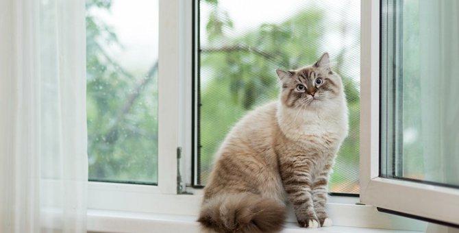 猫が尻尾で足を隠す時の心理とは?