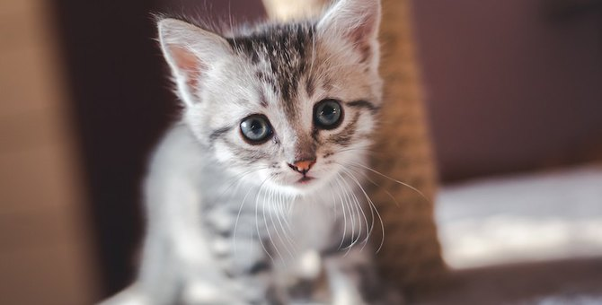 飼い主の疲れが吹っ飛ぶ猫の可愛い仕草10選