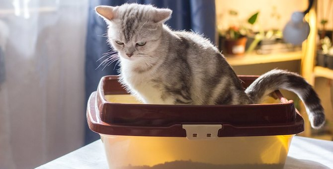 猫のうんちに血がついている時に考えられる7つの病気、対処法