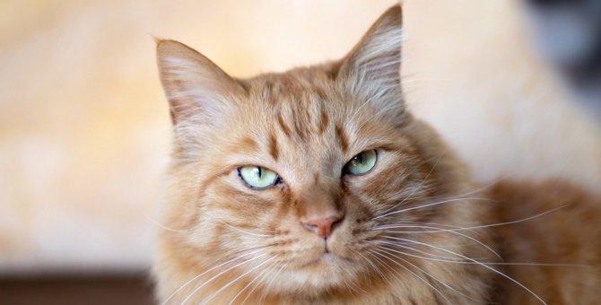 猫を触らない方がいいタイミング4つ