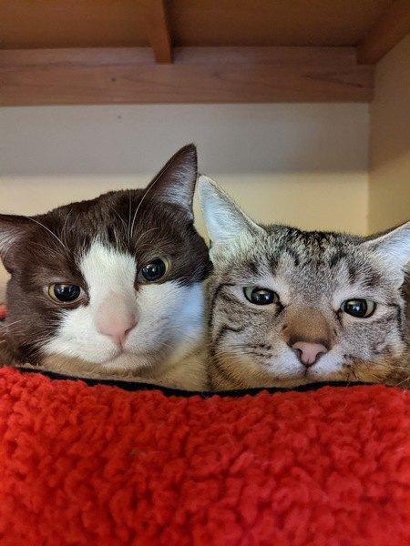 猫が飼い主にしている『浮気チェック』行動3つ