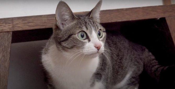 気づけばそばにいる♡先輩にゃんこをストーカーする猫さん