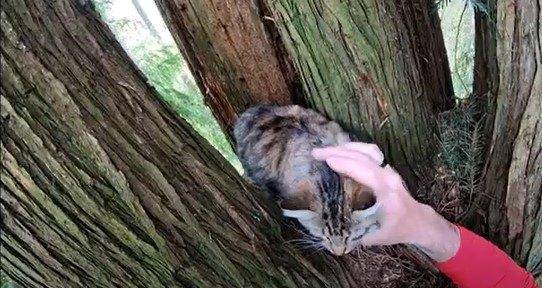 高さ15mで3日も動けなかった猫をレスキュー!ほのぼのするのはなぜ?