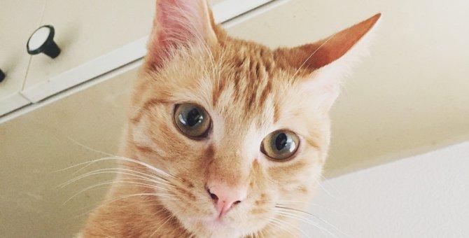 ぼくはまだ生きたいんだ・・・! 自ら助けを求めに走った猫