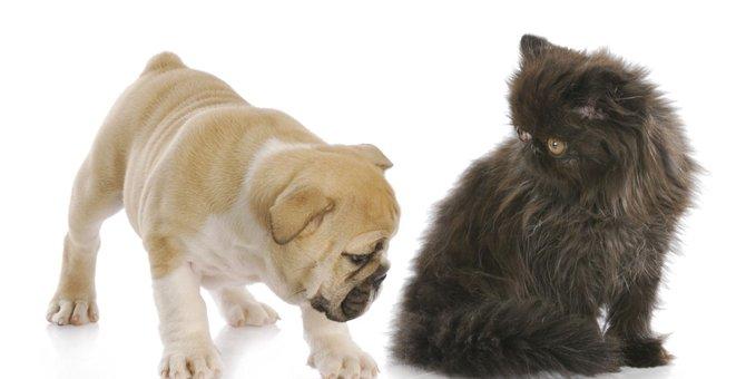 猫が痔になる原因と症状、治療の方法