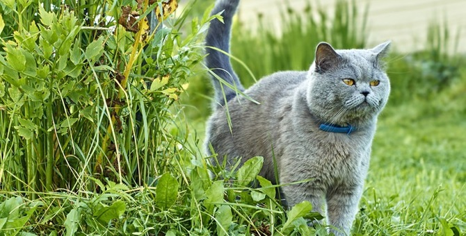 猫のマーキングは去勢避妊手術や生活環境で改善できる!