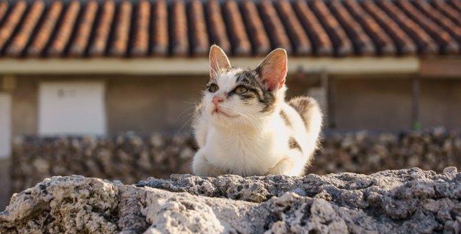 沖縄の猫島3選!触れ合える場所と訪れる時のマナー