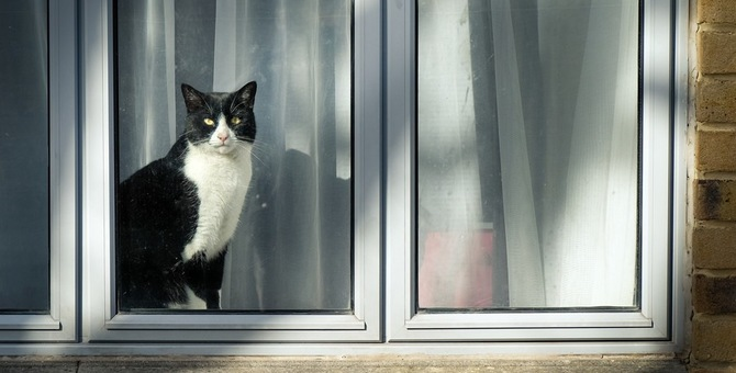 外出した猫が違う家で飼われていたら取り戻すべき?法律や対処法