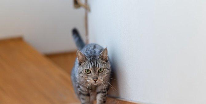 猫が飼い主の後を『付いて回る』4つの理由!度を超えた場合の注意点とは?