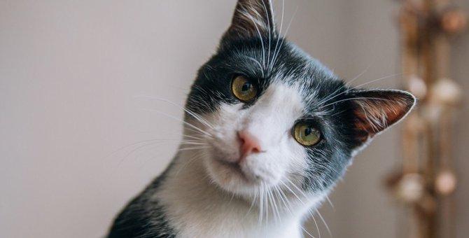 猫の『自動トイレ』ってどんなもの?メリットとデメリットを検証